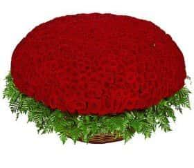 1001 красная роза