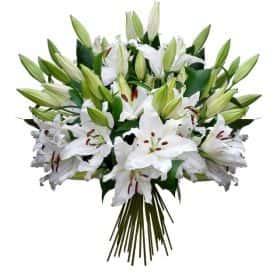 Букет из 29 белых лилий