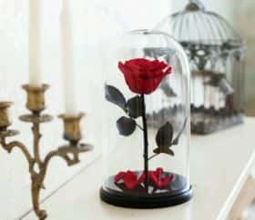 Алая роза в колбе