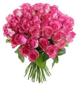 Кенийские розы Розовые 40 см 51 шт
