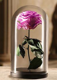 Лиловая роза в колбе