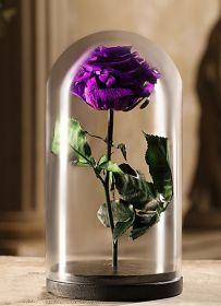 Сиреневая роза в колбе