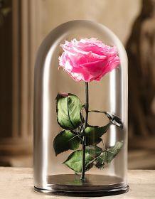 Светло-розовая роза в колбе