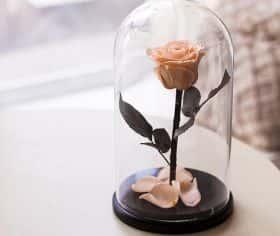 Кремовая роза в колбе