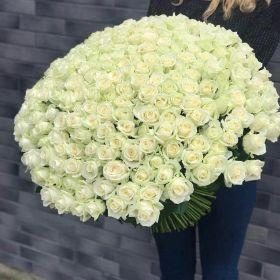 101 Эквадорская роза Мондиаль