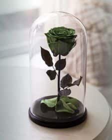 Зеленая роза в колбе 30 см