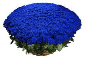 1001 синяя роза