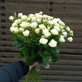 Роза кустовая Вивьен 60см