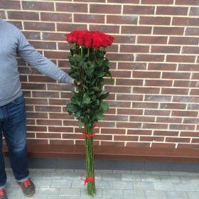 17 гигантских красных роз 170см