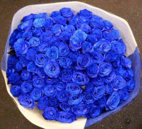 Букет из 51 натуральной синей розы 70-90 см