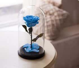 Голубая роза в колбе 30 см
