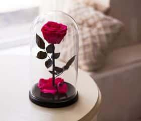 Ярко-розовая роза в колбе 30 см