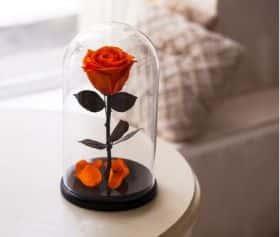 Оранжевая роза в колбе 30 см