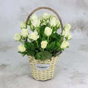 25 белых роз 40 см. в корзине VIP
