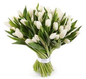 Белые тюльпаны 51 шт
