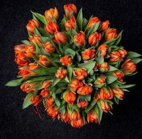 Тюльпаны оранжевые 51 шт