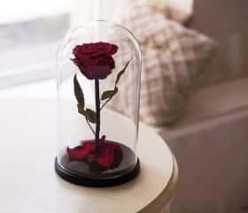 Темно-красная роза в колбе 30 см