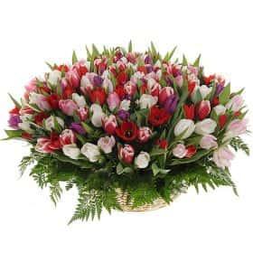 """Композиция из 201 тюльпанa """"Весна моей души..."""""""