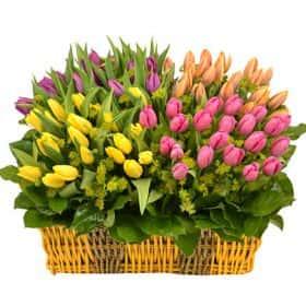 Корзина с тюльпанами «Фонтан любви»