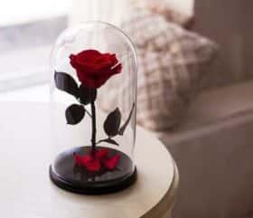 Красная роза в колбе 20 см